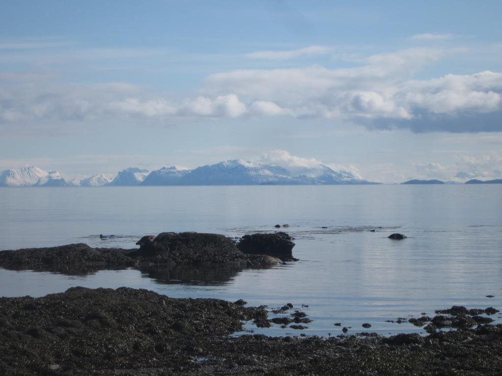 Utsikt mot horisonten fra Loviktunet